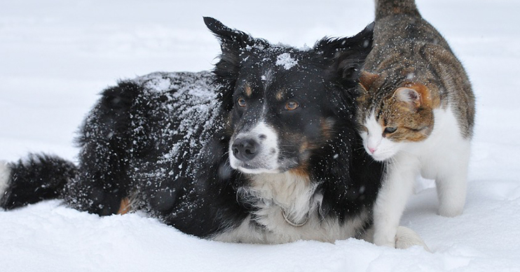 Dog and cat in the snow together.