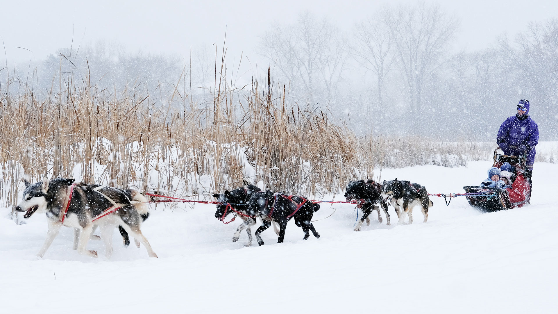 People riding in dog sled in winter